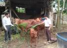 Sức lan tỏa của đồng vốn Quỹ Hỗ trợ nông dân