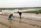 Lâm Thao: tích cực chuẩn bị cho sản xuất vụ Chiêm xuân