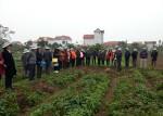 Hội nghị thăm quan mô hình trồng khoai tây vụ đông năm 2017