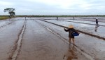 Lâm Thao tập trung gieo cấy vụ mùa