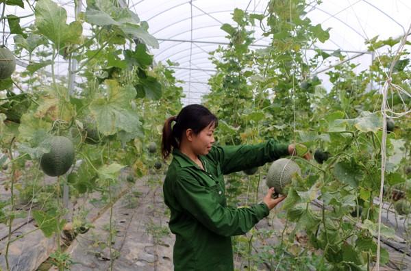 Lâm Thao: Phát huy vai trò của Hội Nông dân trong xây dựng nông thôn mới.