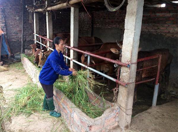 Hội Nông dân huyện Lâm Thao thực hiện hiệu quả hoạt động tư vấn, hỗ trợ nông dân